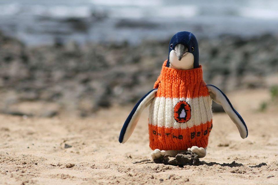 可愛到難以忽視!109歲人瑞阿公「替企鵝編織針織衫」 一換上「小企鵝秒變名模」:都是為了保護牠們