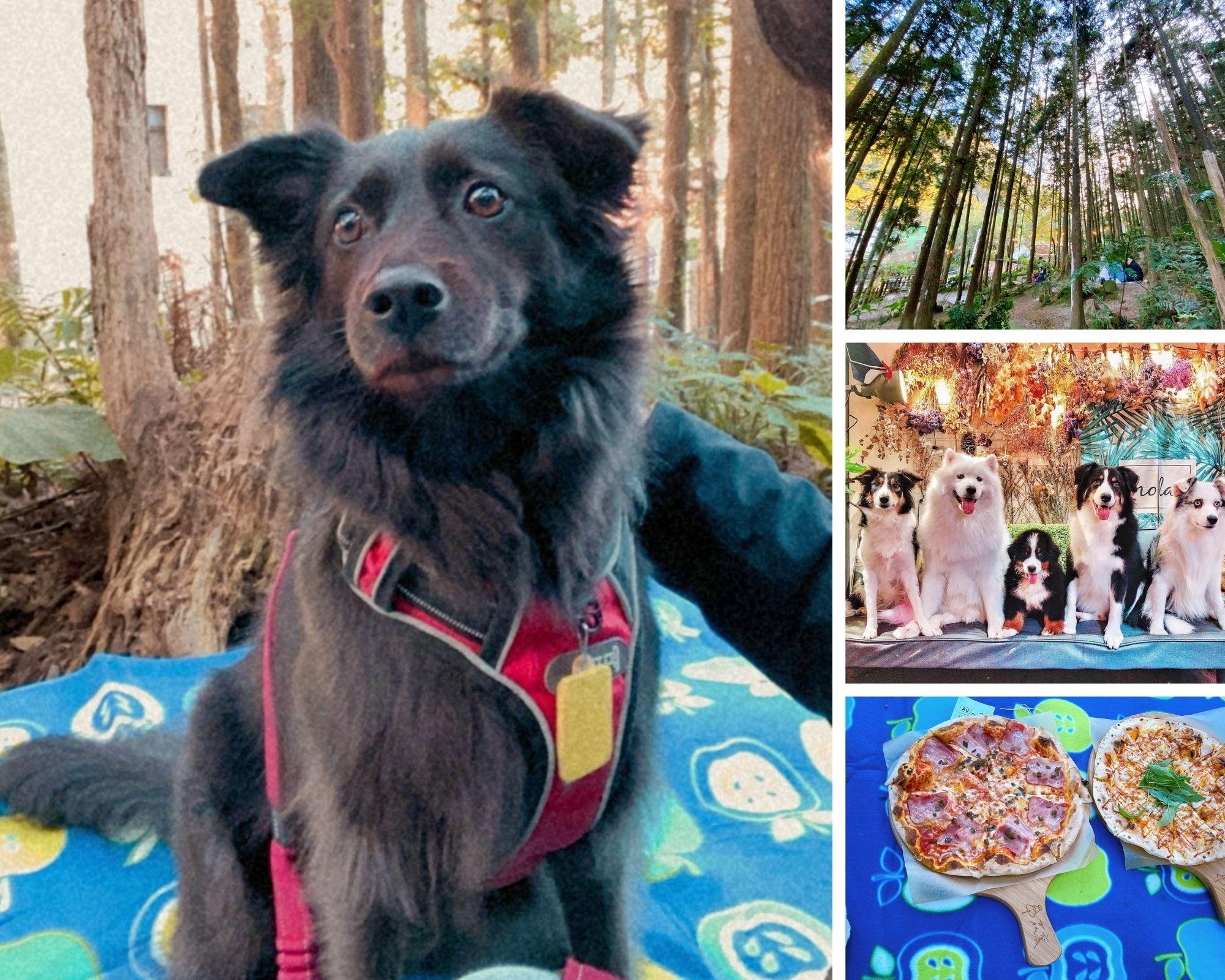【寵物友善餐廳】毛孩一秒變網美 還有草皮跑跑、森林吃披薩