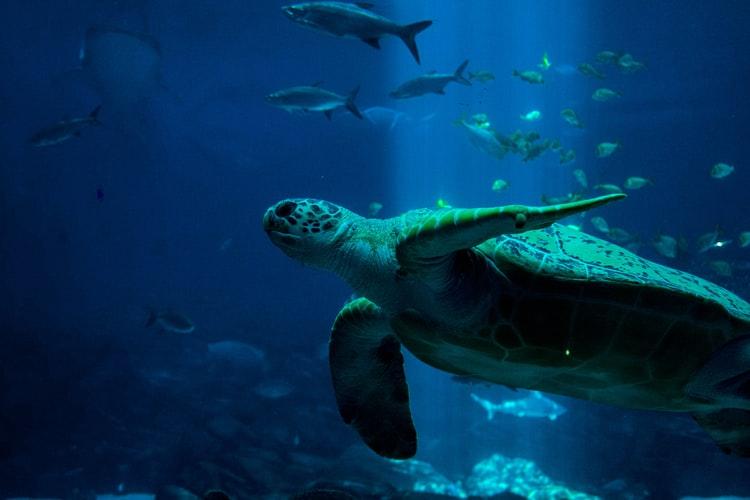 海洋保育|不吃魚,真的能救海洋生態?寫在《海洋陰謀》之後